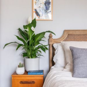 1 Best Plants for a Better Nights Sleep 1