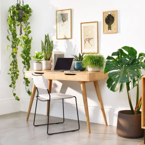 7 best office plants to spruce up your home office 1