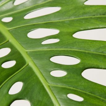 8 The Importance of wiping plant leaves 1