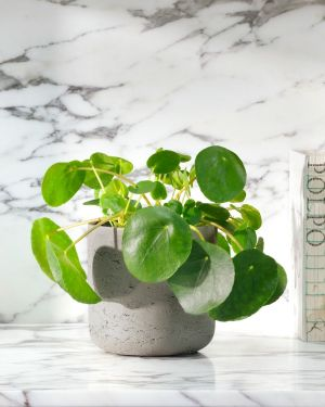 9 Types of Indoor Plants That Purify the Air 1