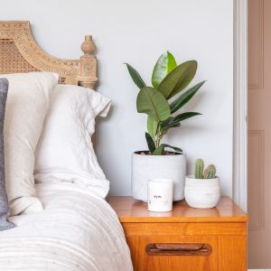9 Types of Indoor Plants That Purify the Air 4