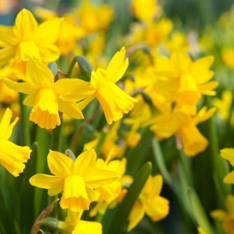 17 What Bulbs to Plant in Autumn 1