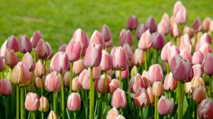 17 What Bulbs to Plant in Autumn 3