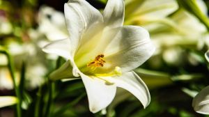 17 What Bulbs to Plant in Autumn 4