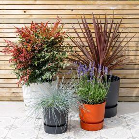 10 Best evergreen plants for Autumn 1