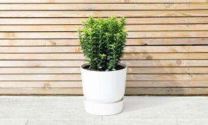 10 Best evergreen plants for Autumn 2