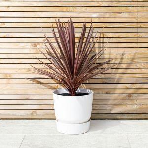 10 Best evergreen plants for Autumn 3