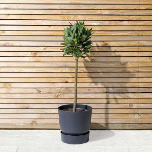 10 Best evergreen plants for Autumn 4