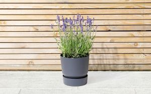 10 Best evergreen plants for Autumn 5
