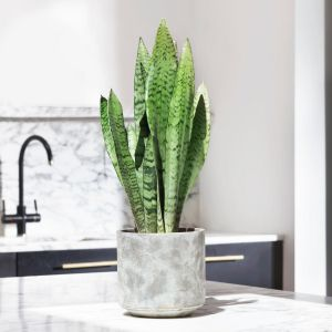 14 How to look after your Cactus 3