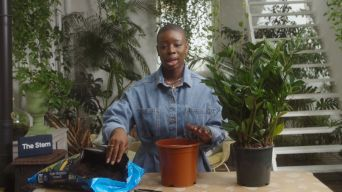 How to repot thumbnail