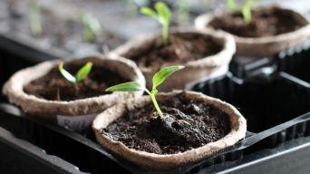 Growing veg indoors