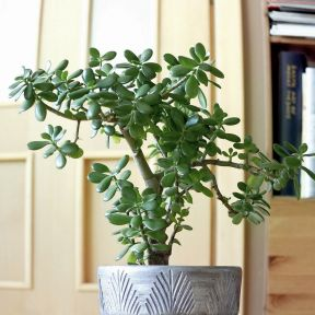 15 Best Feng Shui Plants for Good Fortune 1