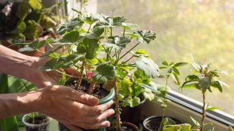 Autumn plant care guide