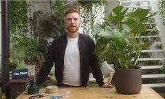 Indoor plant light requirements