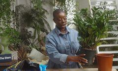 Repotting indoor plants