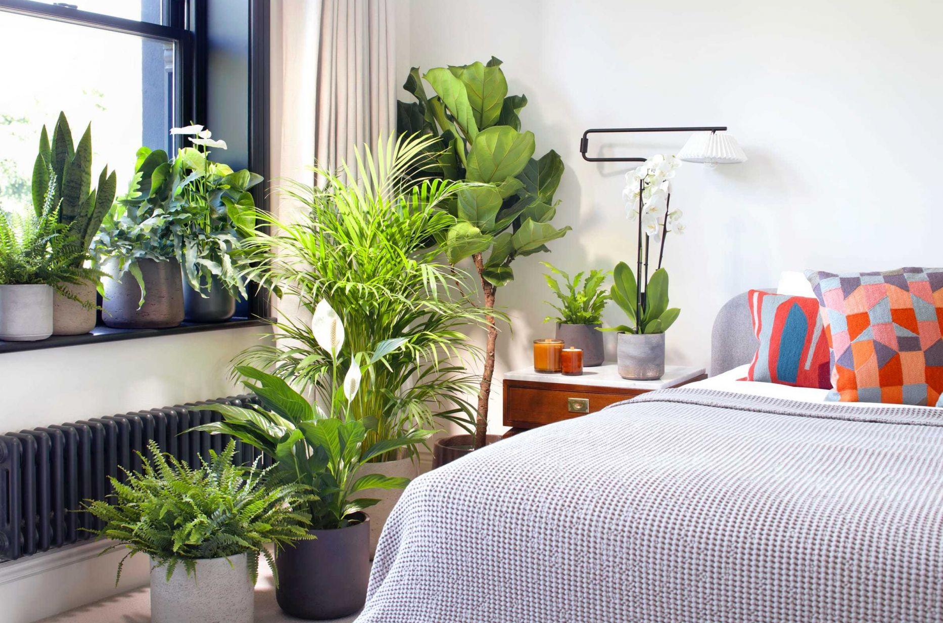 Room Bedroom