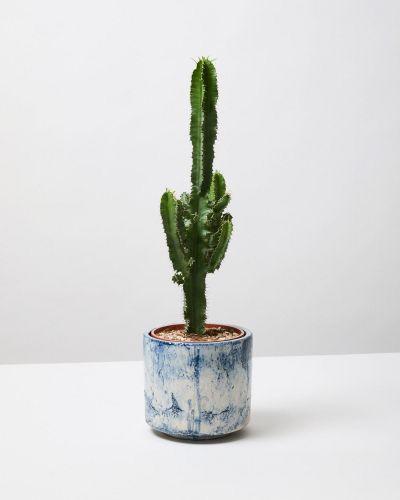 Desert cactus 4