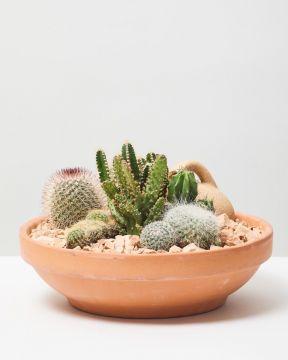 Cactus mix 1