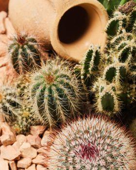Cactus mix 2