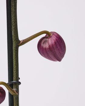 Purple Orchid 0721
