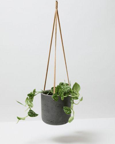 Satin Pothos In Hanging Black Fiberclay Pot