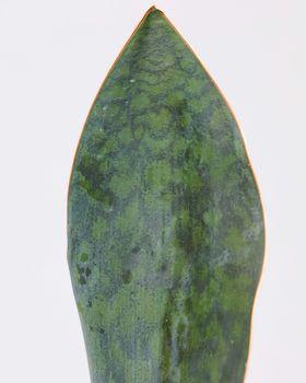 Shark Fin Plant 0501