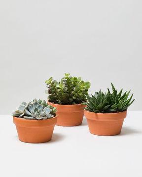 Succulent Plant bundle