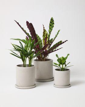 Dalton plant pot with plants